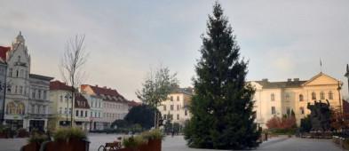 17-metrowa choinka z Borów Tucholskich stanęła na Starym Rynku-24124
