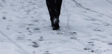 Złodziej zdemaskował się sam. Dał się wytropić po śladach na śniegu-24704
