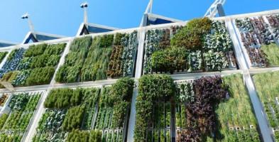 Urząd Miasta tworzy na swoich budynkach zielone ściany-26832