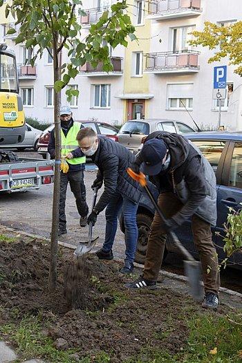 23 lipy dodadzą zieleni ulicy Lelewela-8718